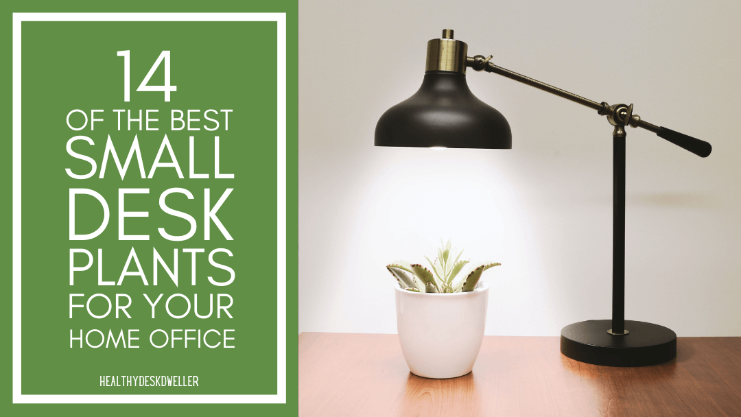 14 of the Best Small Desk Plants for Your Home Office