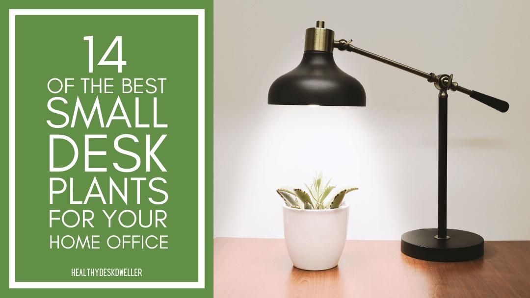 small desk plants